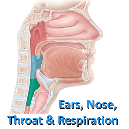 Ear Noise And Throat 24