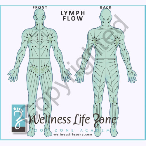 Lymph-Chart-copyrighted square