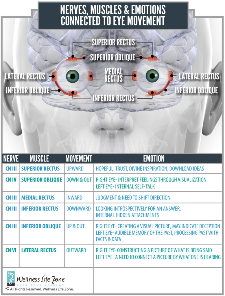 cranial nerves for your eyes